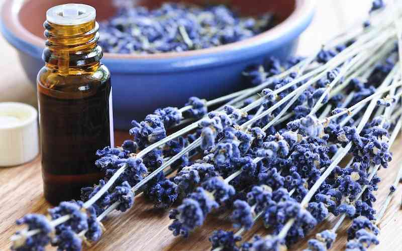 Dried lavender and essential oils. Lavender is frequently used in aromatherapy.
